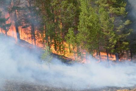 Ой хээрийн түймрийн улмаас 30 гаруй сая төгрөгийн хохирол учирчээ