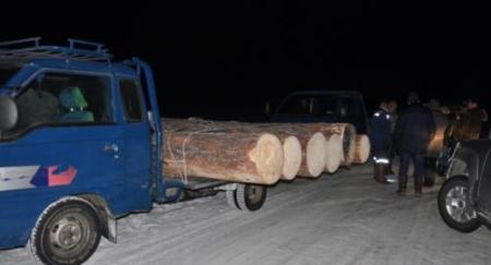 Хууль бусаар мод бэлтгэсэн 405 хүн ял эдэлж байна