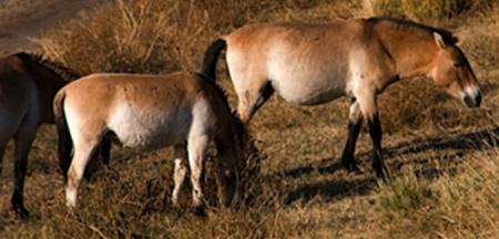 Прагийн амьтны хүрээлэн Монгол гэрээр гоёжээ