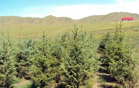 20 иргэн тарьсан ойгоо төрд  худалджээ