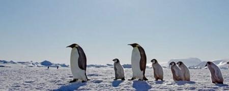 Антарктидын оцон шувууд өдгүй болжээ
