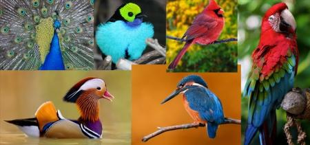 Хамгийн үзэсгэлэнтэй шувууд