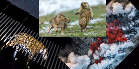 Байгалийн сэдэвт гэрэл зургийн уралдааны 2019 оны шилдэг бүтээлүүд