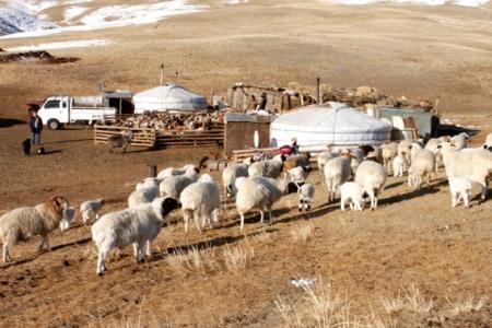 Монгол Улсын мал сүрэг 70 сая 949 мянгад хүрчээ