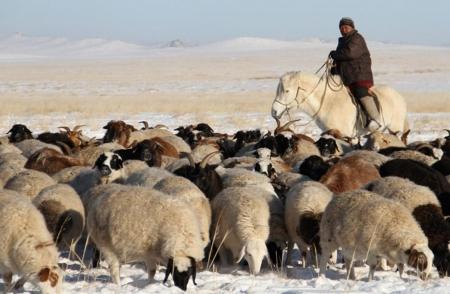 ''Монгол малчин'' үндэсний хөтөлбөрийг баталлаа