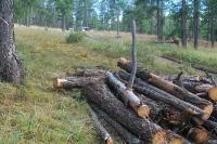 Ойн цэвэрлэгээ хийх нэрийдлээр ууланд гарч мод бэлтгэж байсныг албаныхан үгүйсгэж байна