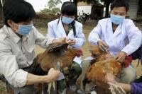 Шувууны томуу өвчнөөс сэргийлэх сэрэмжлүүлэг гаргажээ