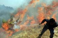 Түймрийн улмаас байгаль экологид 20,1 тэрбумын хохирол учирчээ