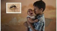 Зика вирусын халдвар Хятадад бүртгэгджээ