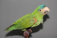 Богд хааны ордон музейн шувууны чихмэлийг засварлана
