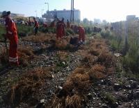 287 мянган ам метр талбайн зэрлэг ургамлыг устгажээ