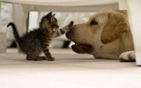 Нохой, мууранд үржил зогсоох мэс ажилбар хийнэ