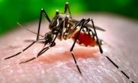 Зика вирус Ази тивд тархаж болзошгүйг анхааруулав