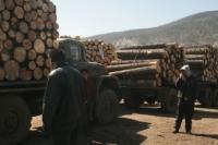 Хууль бусаар мод тээвэрлэж явжээ