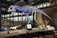 Өмнөговь аймагт динозаврын музей байгуулна