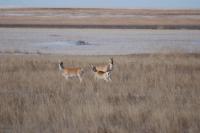 Монгол дагуурын дархан цаазат газрыг дэлхийн өвөөр бүртгэлээ