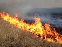 Түймрийн улмаас 61337 га ой, хээрийн бүс шатжээ