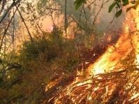 Нийслэлд ой хээрийн түймэр гараагүй байна