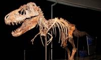 80 сая жилийн настай үлэг гүрвэлийн олдворыг хууль бусаар олж авсан байжээ