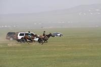 Соёолон морьд гарааны зурхай руу хөдөллөө