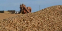 Улаанбуудайн тонн тутамд 41000-45500 төгрөгийн урамшуулал олгоно