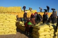 Баян-Өлгий аймагт 700 тонн өвс, 480 тонн тэжээлийг хөнгөлөлттэй үнээр олгоно