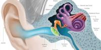 Э.Төрмөнх: Чихний өвчлөл хүндэрвэл тархины менингит болох аюултай