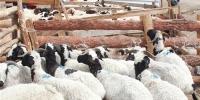 Эмээлт захад хонь 110-250 мянган төгрөгийн үнэтэй байна