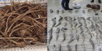 Ургамал, амьтны гаралтай түүхий эдийг нууж тээвэрлэсэн хэрэгт 2 жилийн хорих ял оногдуулжээ