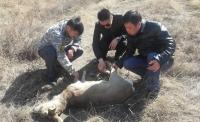 Зэрлэг ноход амьтан барьжээ