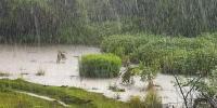 Өнөөдөр Дорнодын зүүн хэсгээр их бороо орно