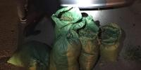 36.5 кг сэтгэцэд нөлөөлөх төрлийн ургамал тээвэрлэж явсныг илрүүллээ