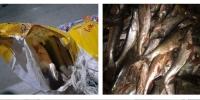Гарал үүслийн бичиггүй загас тээвэрлэн явсан зөрчлийг шалгаж байна