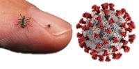 Сэрэмжлүүлэг: Хачигнаас хүнд халдварладаг шинэ төрлийн вирус дэгджээ