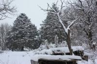 Зүүн аймгуудын ихэнх нутгаар ахиухан хэмжээний нойтон цас орно