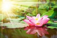 Дэлхийн хамгийн үзэсгэлэнтэй 6 зүйлийн усны цэцэг