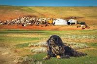Говь, тал, хээрийн нутгаар салхи шуургатай байхыг онцгойлон анхааруулж байна