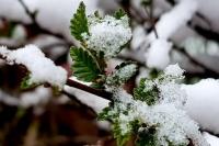 Хангай уулархаг нутаг, Халх голын сав газраар бороо, нойтон цас, цас орж, зөөлөн цасан шуурга шуурна