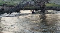 Усанд осолдсон таван настай хүүгийн цогцсыг олжээ