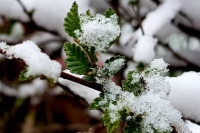 Өнөөдөр нутгийн зүүн хагаст нойтон цас, цас орж, цасан шуурга шуурна