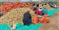 Ургац хураалтад 13 аймгаас 7308 ажлын байрны захиалга ирээд байна
