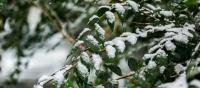 Өнөө маргаашдаа төв болон зүүн аймгуудын нутгийн зарим газраар бороо, уулархаг нутгаар нойтон цас орно