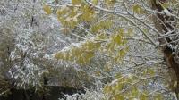 Өнөөдөр Дорнодын нутгаар ахиухан хэмжээний нойтон цас орж, Хэнтий, Сүхбаатарын нутгаар цасан шуурга шуурна