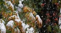 Өнөөдөр Сэлэнгэ, Дархан-Уул аймгийн нутгаар ахиухан хэмжээний нойтон цас орно
